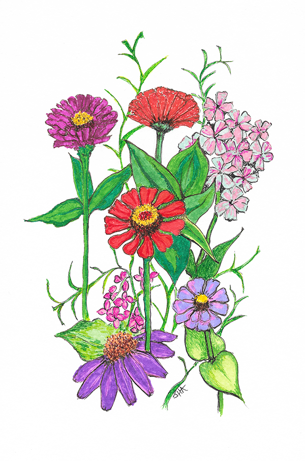 Zinnia Garden web.jpg