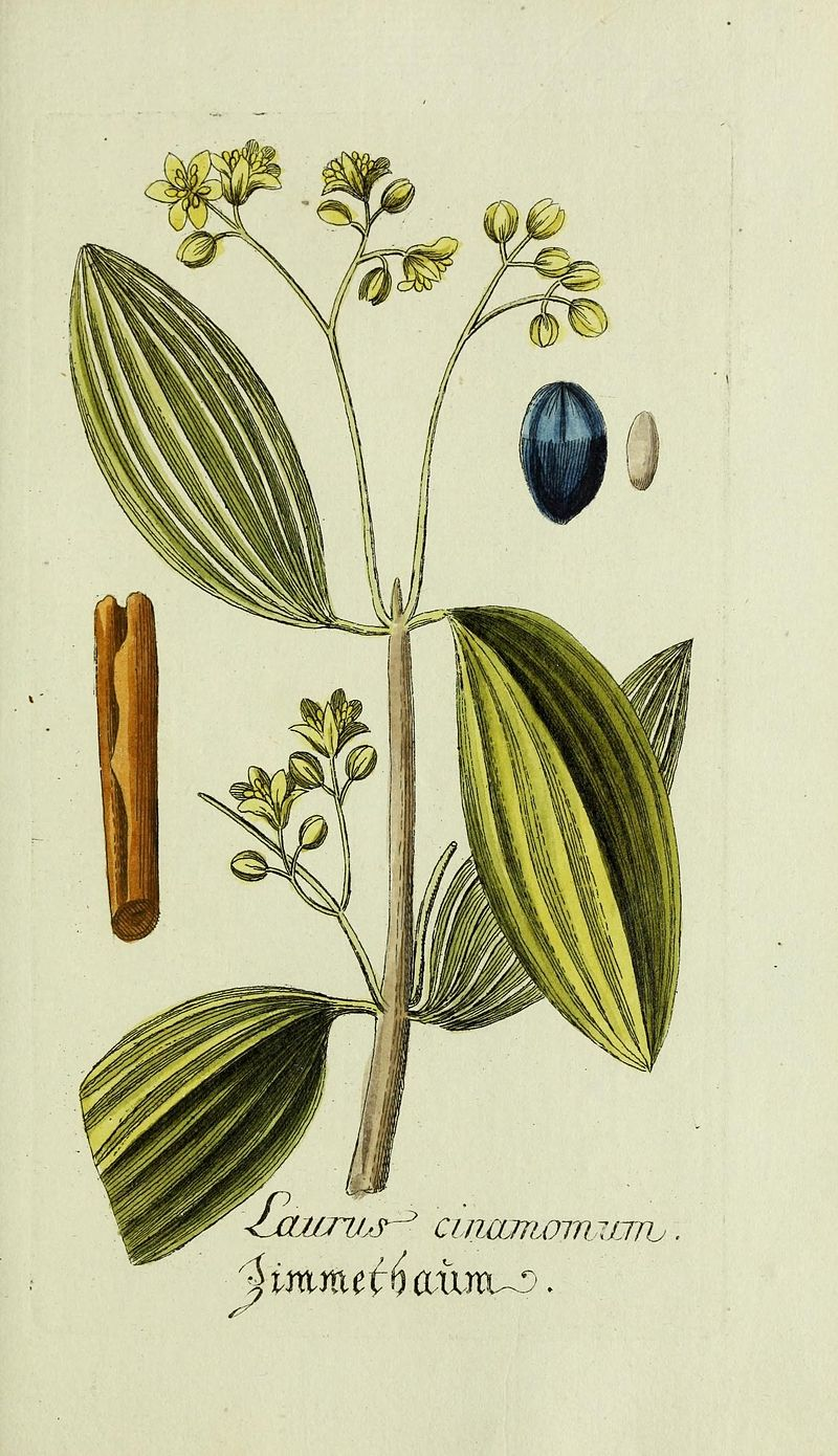 http://www.flickr.com/photos/biodivlibrary/16089041112