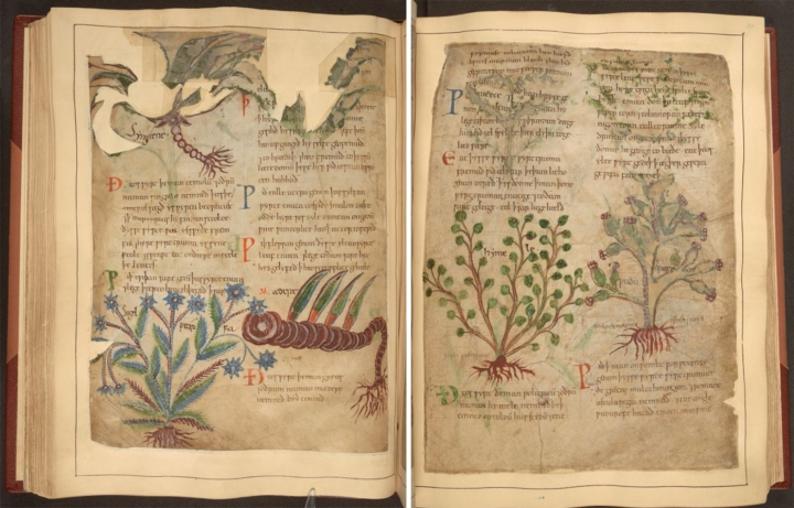 f.36v and f.37r of Cotton MS Vitellius C III (all images via the British Library and used under Public Domain)