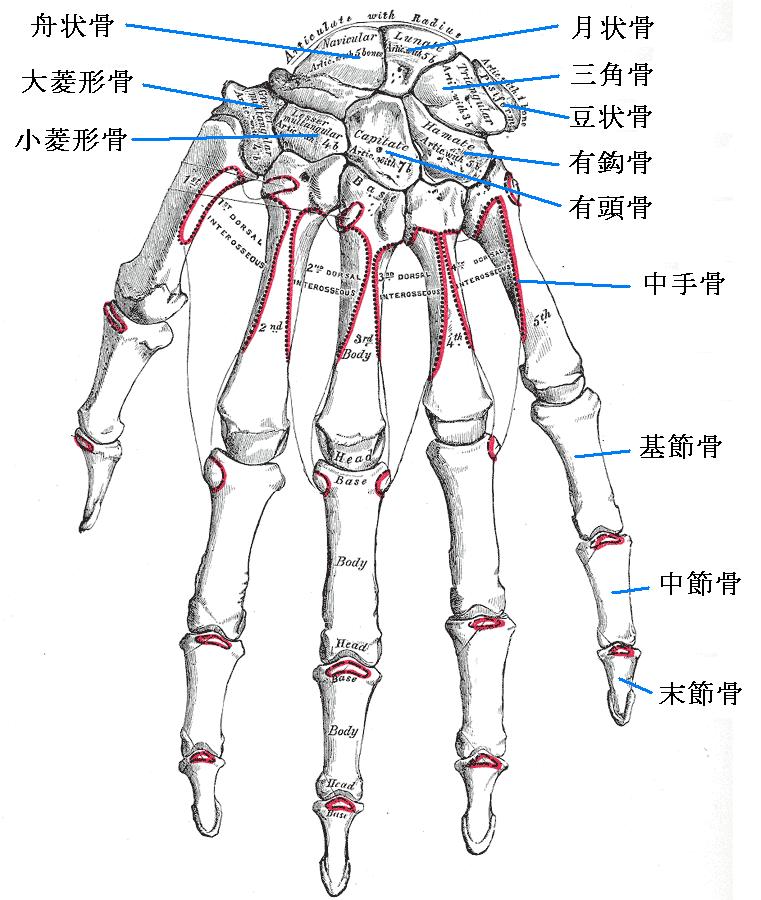 japan hands.png