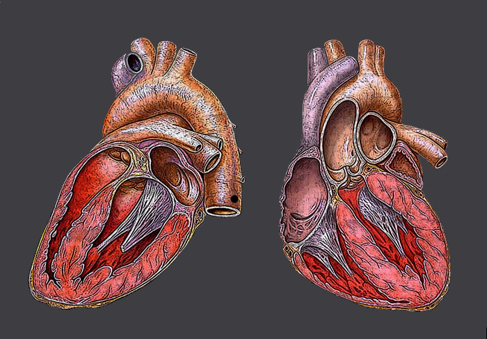 Heart Halves