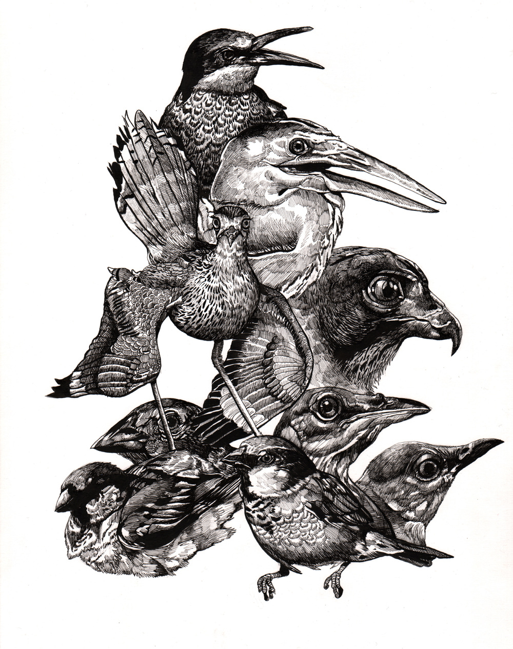 "Endangered Birds   |  14"" x 11""  