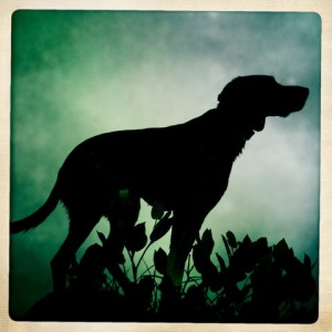 german_shorthair_pointer_silhouette