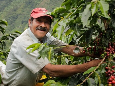 A Vermont Artisan Coffee farmer :-)