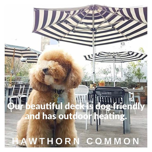 Here at Hawthorn Common, we love our four-legged friends.#hawthorncommon#dogfriendlyvenue#puppylove#seeyouonthedeck#outdooreating#outdoorheating#alfrescodining#melbournefoodie