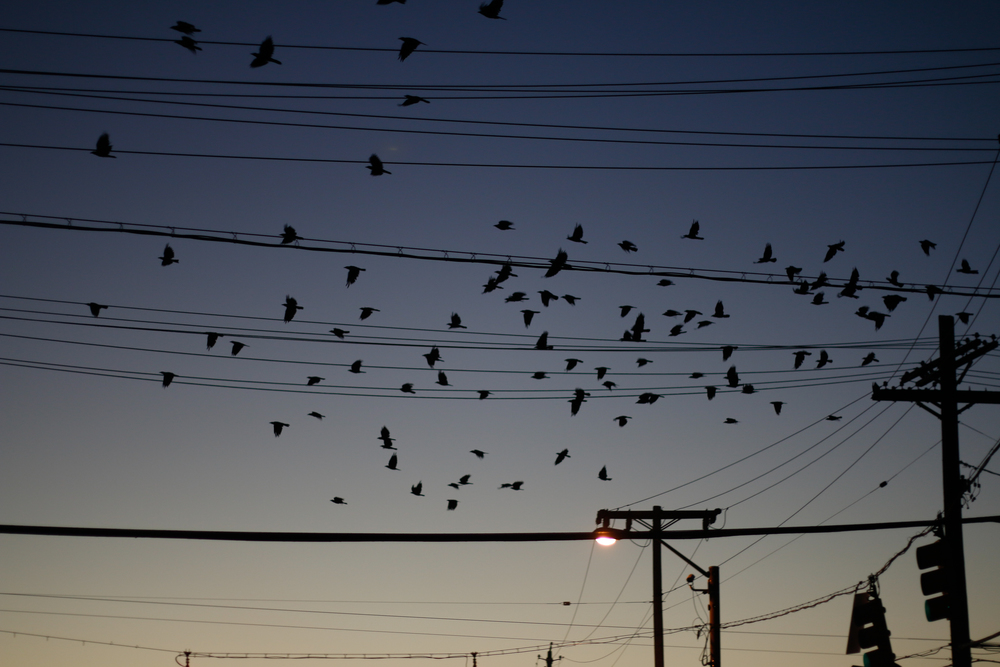 Birds and Wires.jpg