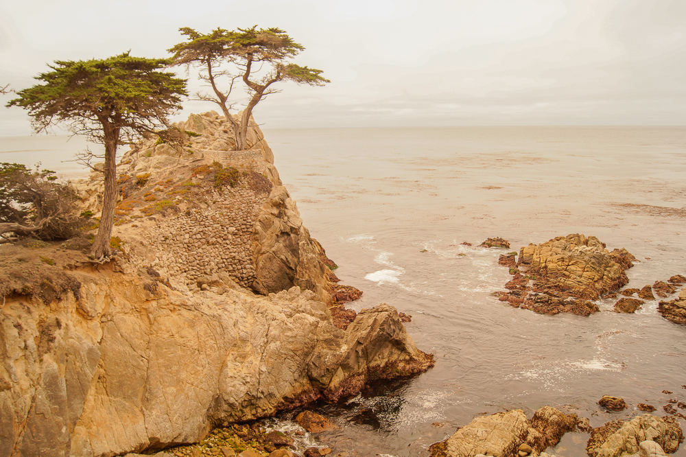 Marker #16: The Lone Cypress