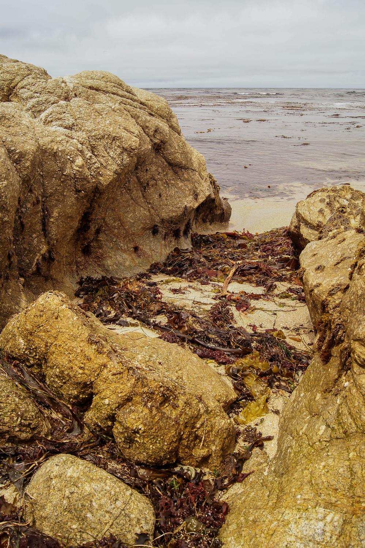 Seaweed Cove