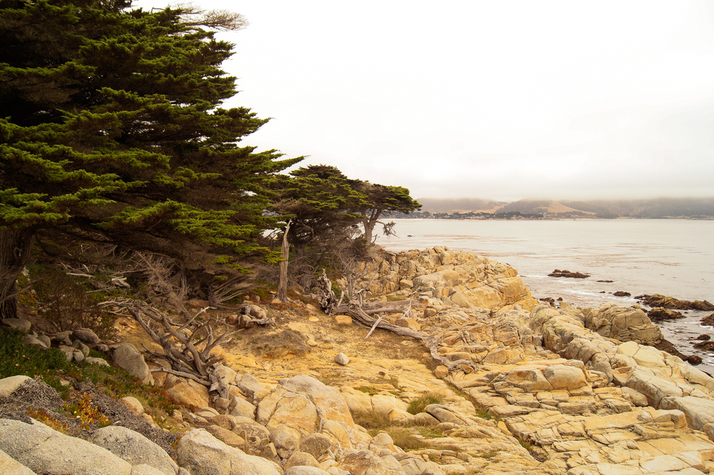 Pescadero Point