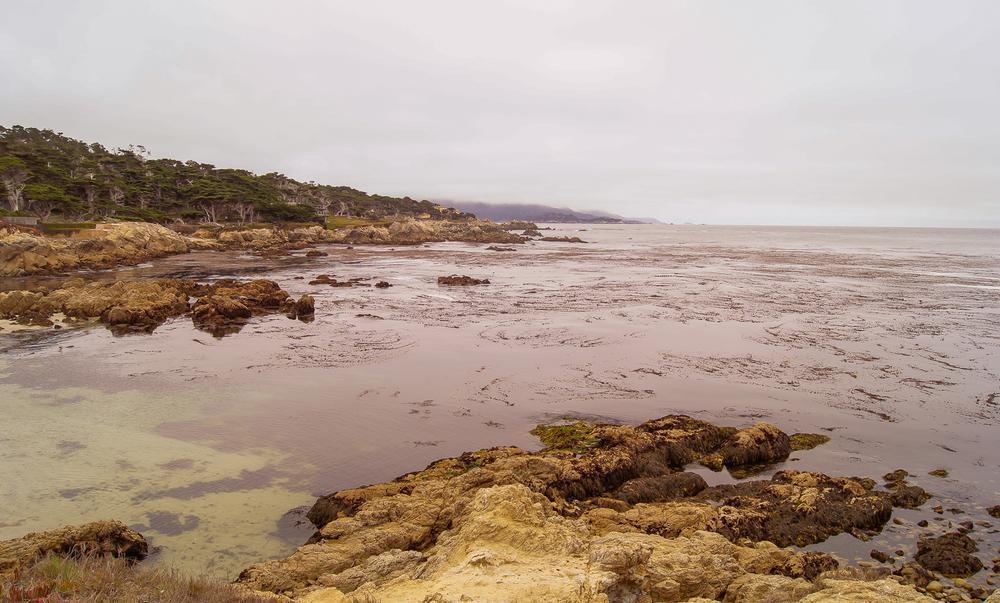 Fanshell Beach