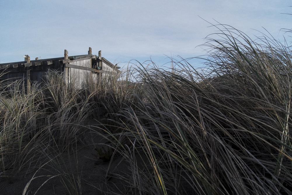 Seashore Sights