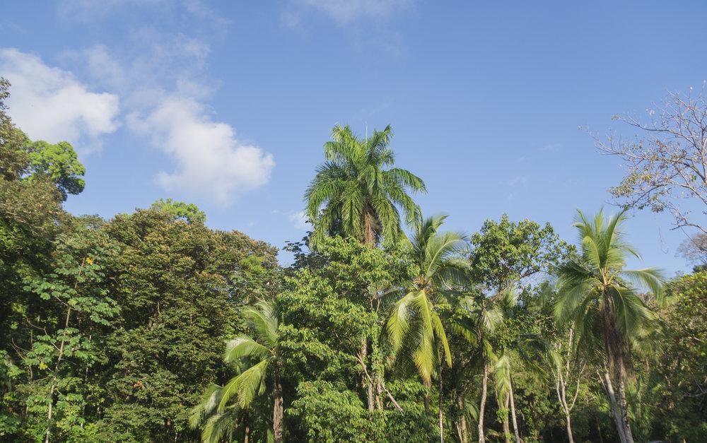Palm Tree Paradise.jpg