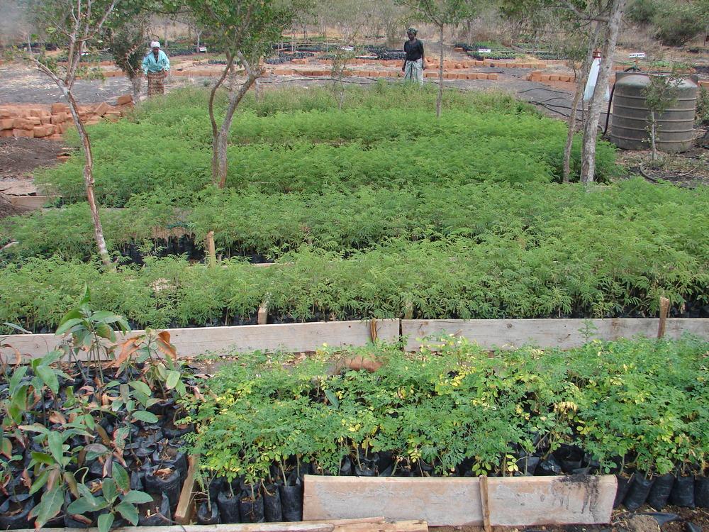 A tree nursery readies seedlings for planting - Kenya