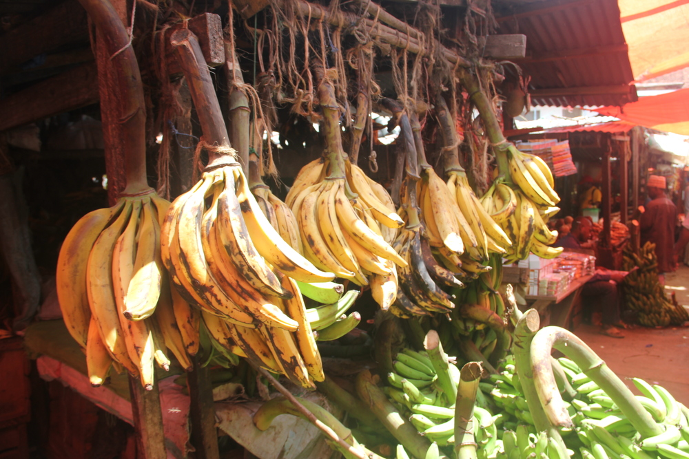 Bananas hang for sale in a market - Tanzania