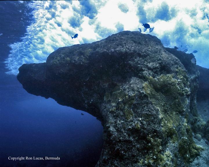 bermuda diving