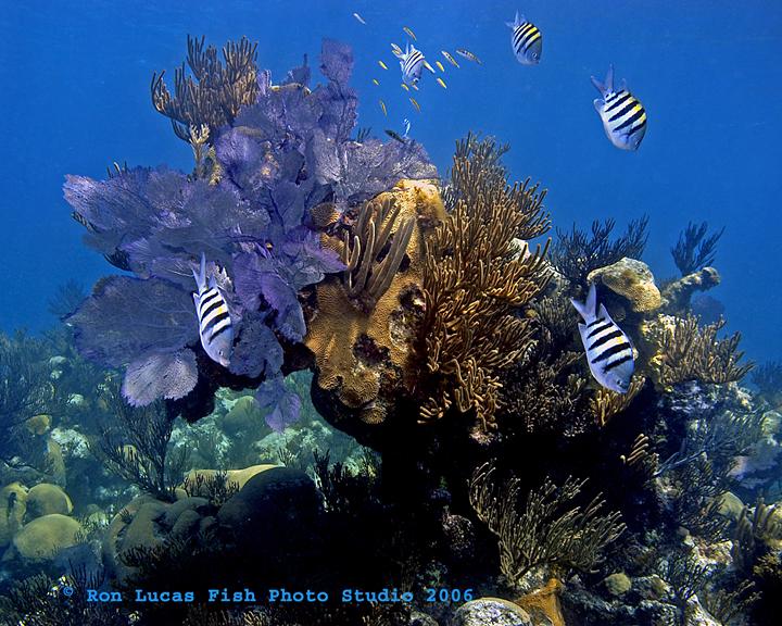 Reef Scene & St Majors Bda TP.jpg