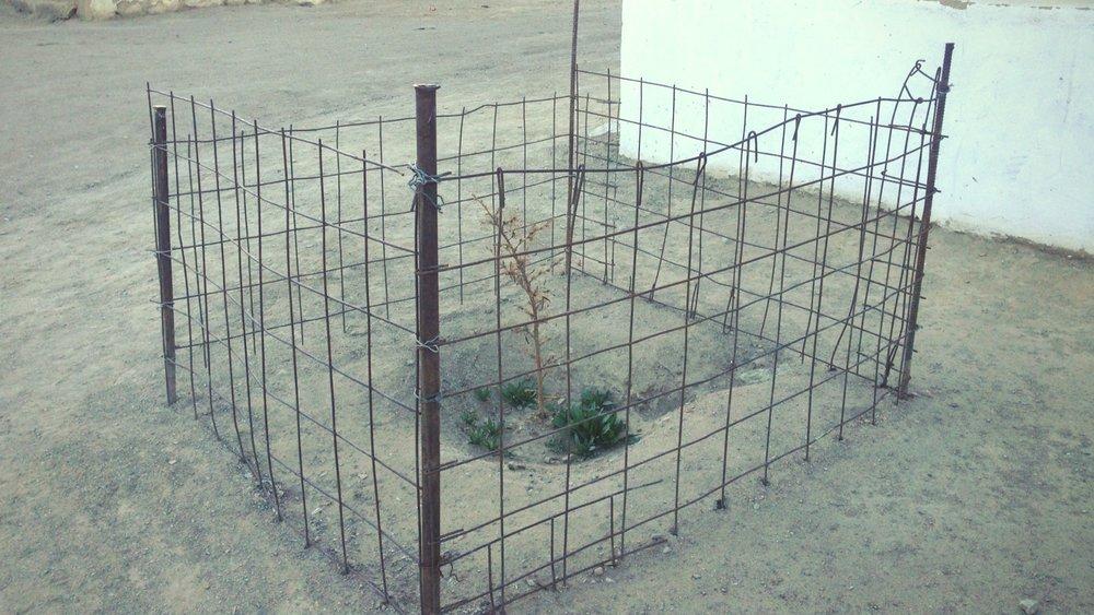 Здесь почти ничего не растет, поэтому любую растительность заботливо берегут.