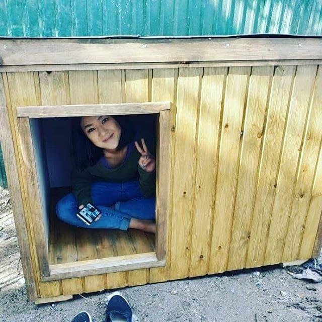 Рабия в комфортной будке своей собаки