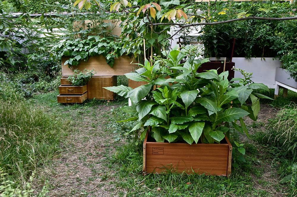 garden02.jpg