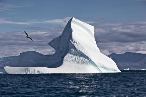 ICE+BERG.jpg