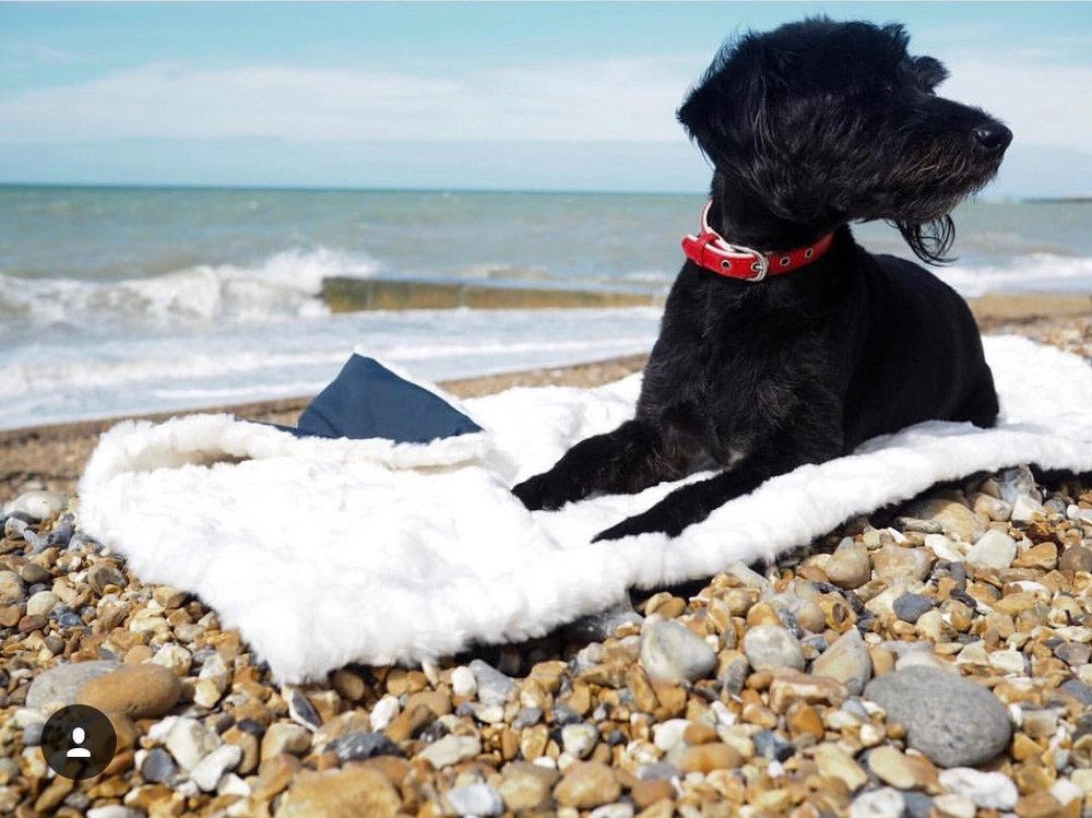 Jack, my jackapoo, on a blankie by the sea in brighton