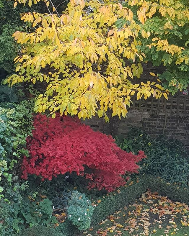 Autumn really has arrived in our garden now.  #autumn #fall #garden #leaves #colours #color #England