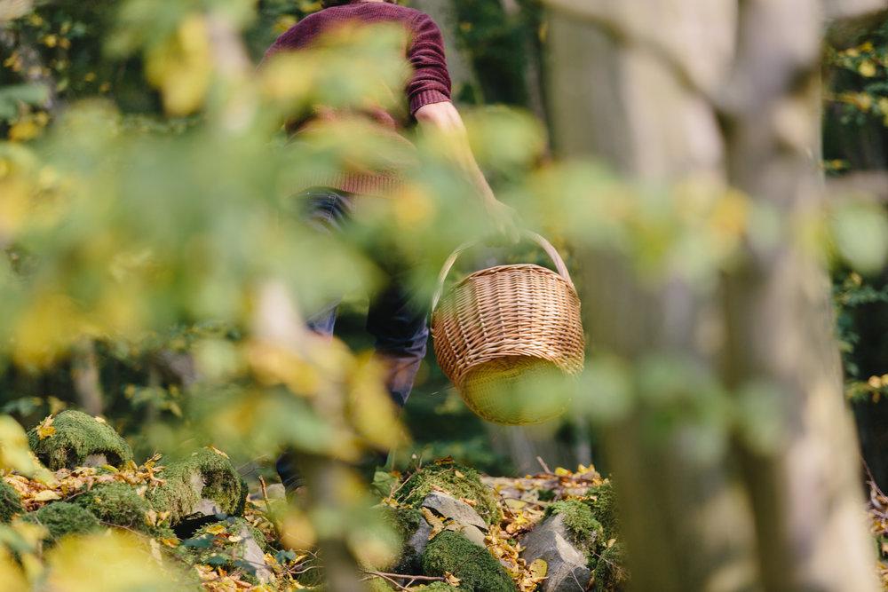 Ben Brumagne, Wilde eetbare planten, wildplukken, wildplukker, opleiding wilde eetbare planten, herborist, teambuilding, workshops, forest to plate, eat the forest, foraging, wildpluk, eetbare paddestoelen