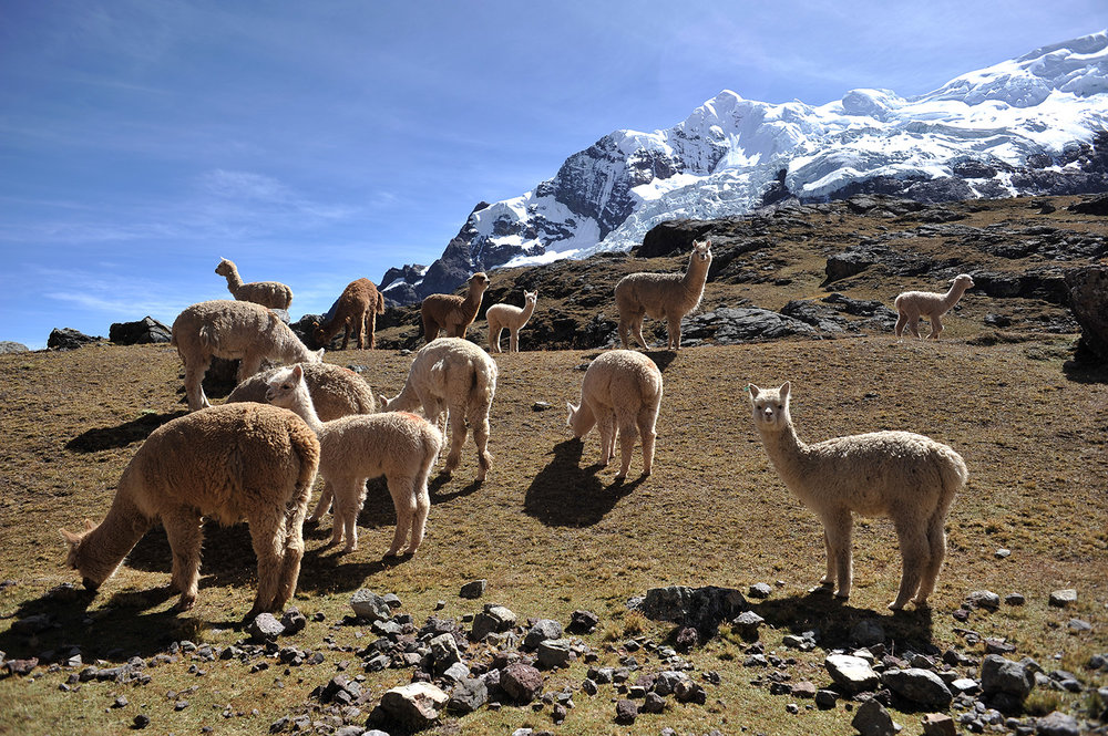 Ausangate-Cusco-0023.jpg