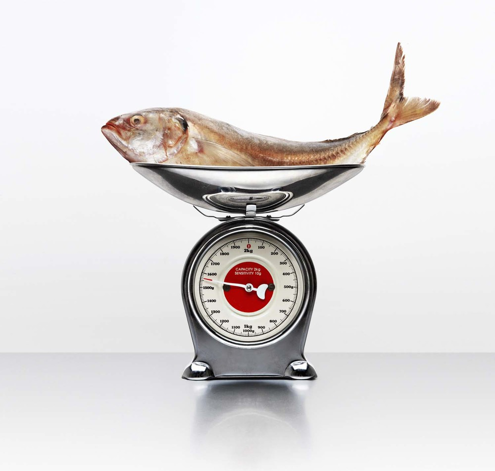 Sea Bass on scales
