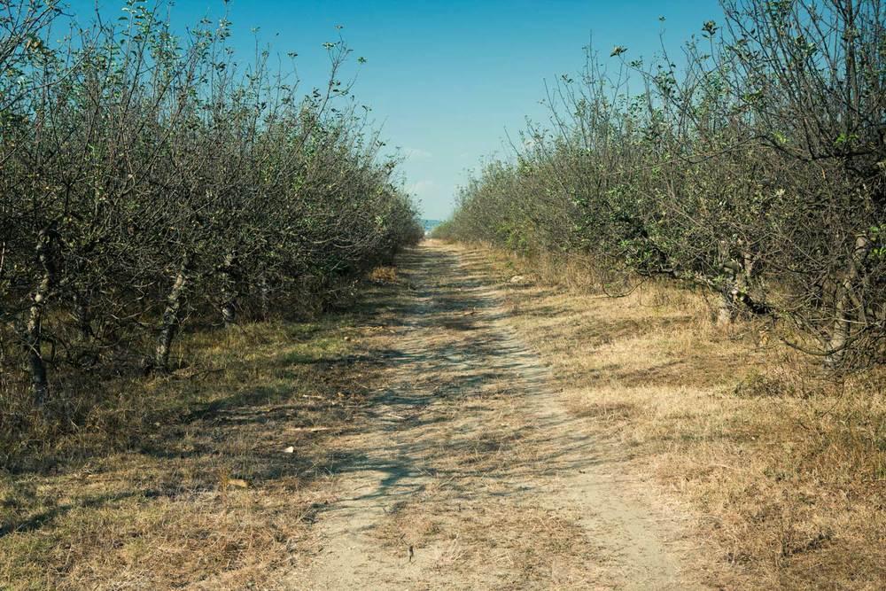 Orchard Romania