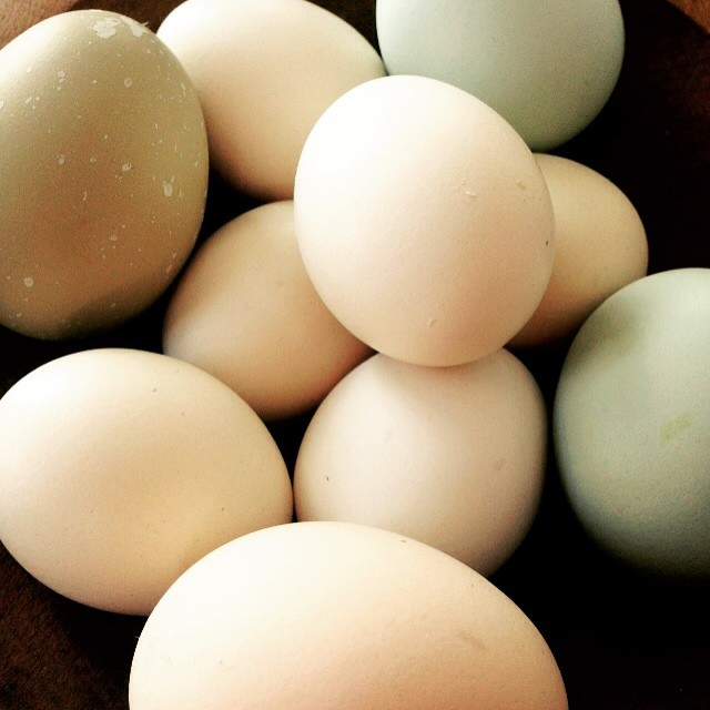 eggs. photo by elena gustavson