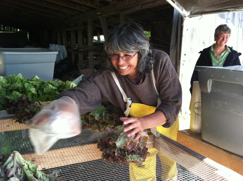 carol tashie of radical roots farm.JPG