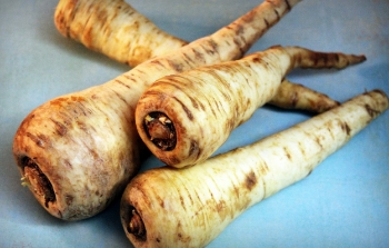 parsnips- cooks like a carrot but sweeter! photo by steve peters