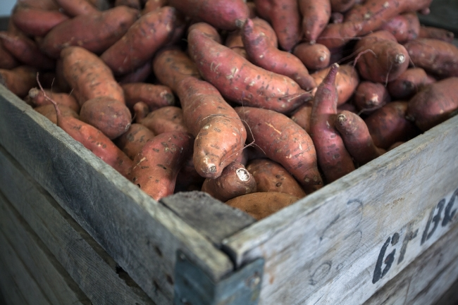 sweet potatoes from Laughing Child Farm, Pawlet, Vermont - photo credit Heidi Bagley