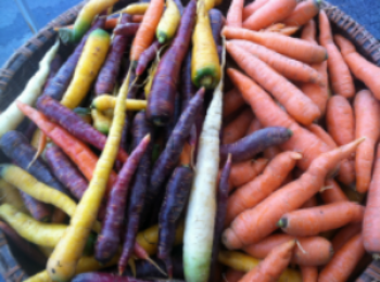 Rainbow of Carrots, courtesy of Lindsay Courcelle