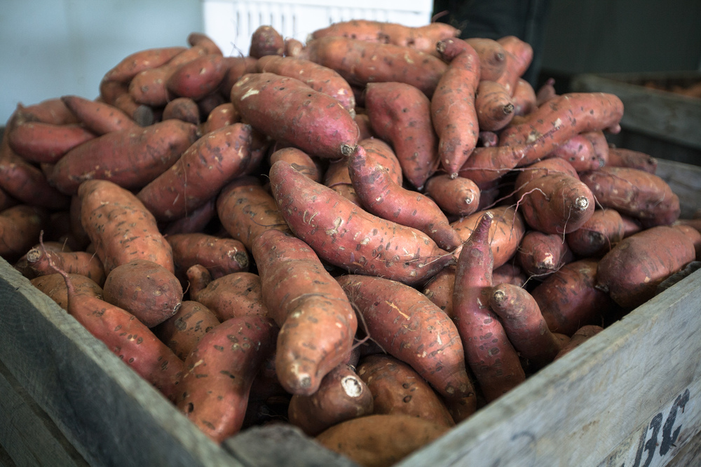 Sweet Potatoes from Laughing Child Farm Photo by Heidi Bagley