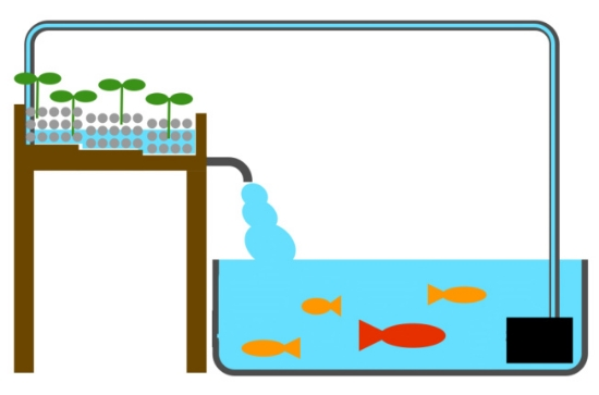 An example of a closed loop aquaponic system. K Griffin/image