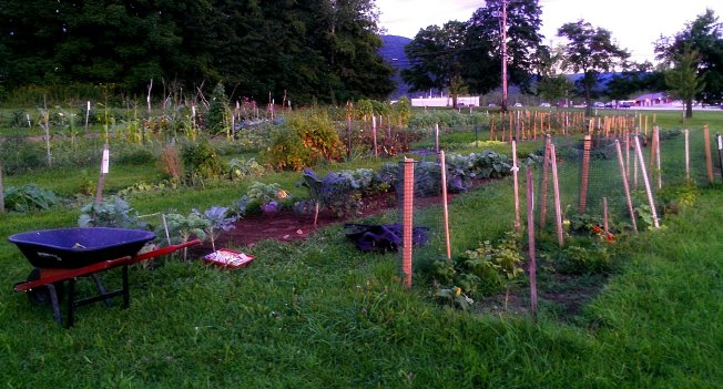 A view of the 2012 community gardens located on Allen Street in Rutland.