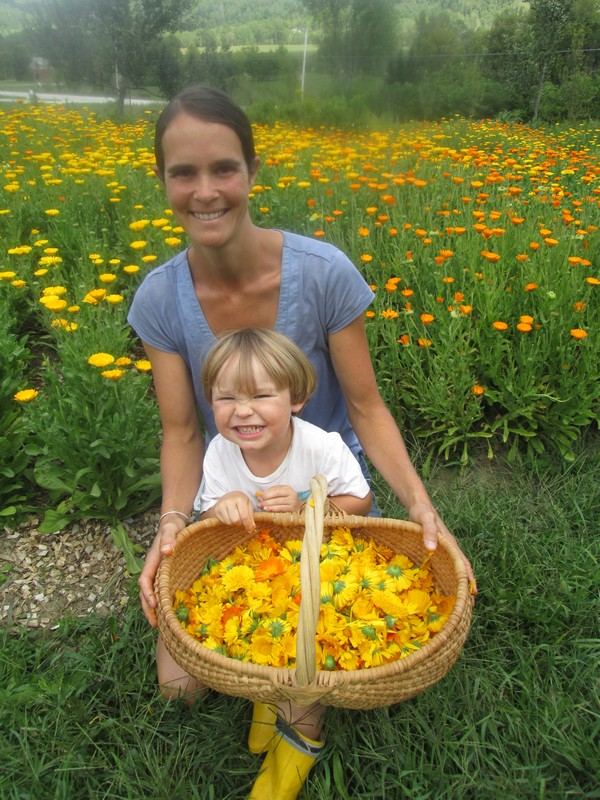 Sourwood Mountain Orchard: Ryan Place and son Will harvest calendula flowers. Photo provided by Sourwood Mountain Orchard