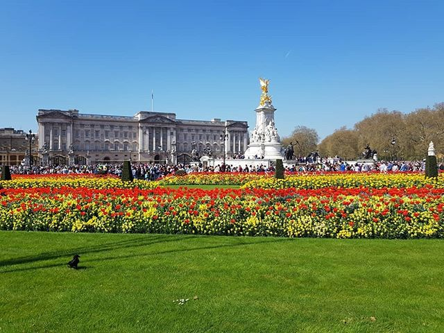Buckingham Palace in all its glory on the Queen's Birthday ☀️🌷
