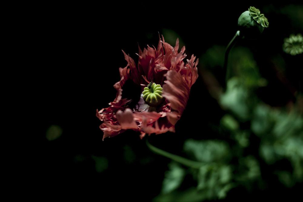 Zena Zialor-Flower-Rubikspace.jpg