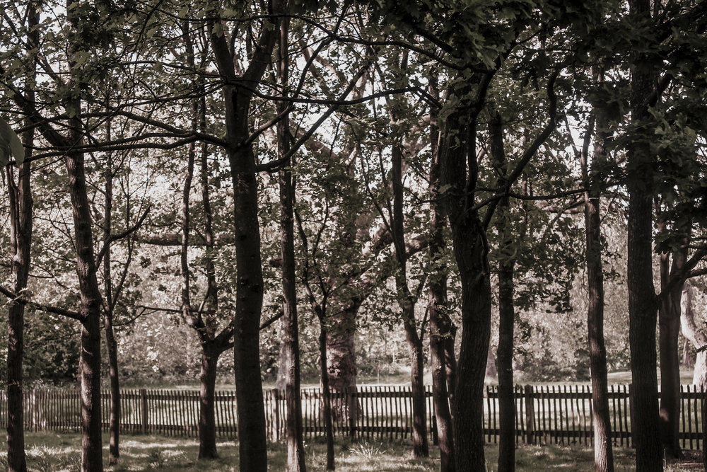 Zena Zialor-Tree-Rubikspace.jpg
