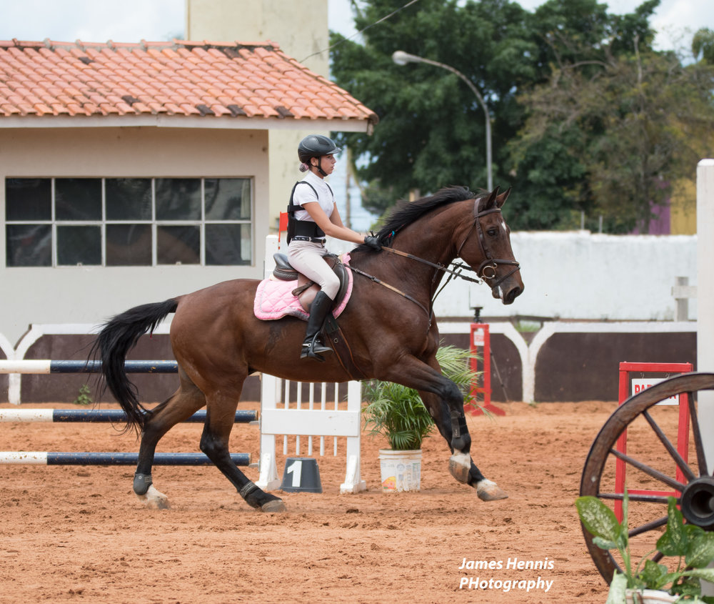 CG-Horse123.jpg