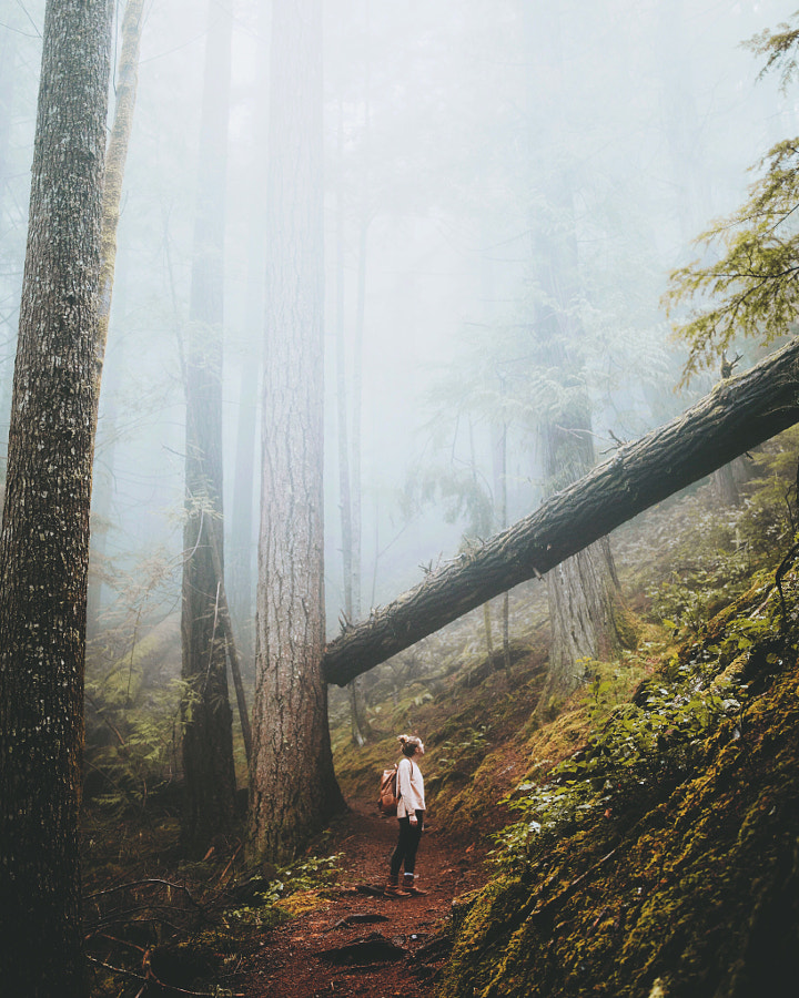 Deep in the forest while the fog was blanketing all around us.. it felt like a dream.