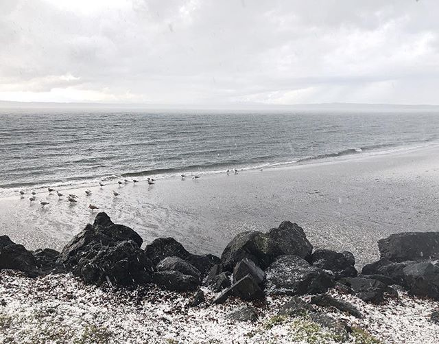 Spent the afternoon sitting in my car at Golden Gardens, listening to podcasts, when a storm came through. Strange to see sand covered in hail! #goldengardens #northwestisbest #pnw #thatpnwlife