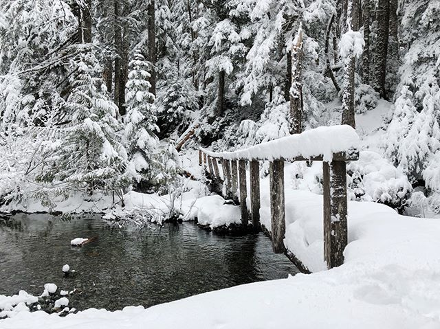 Fresh snow, no snowshoes needed. #picsoritdidnthappen #northwestisbest #pnw #thatpnwlife #seenonmyhike