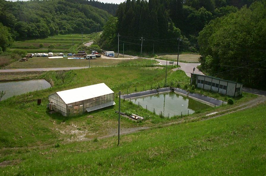 greenhouse test farm2.JPG