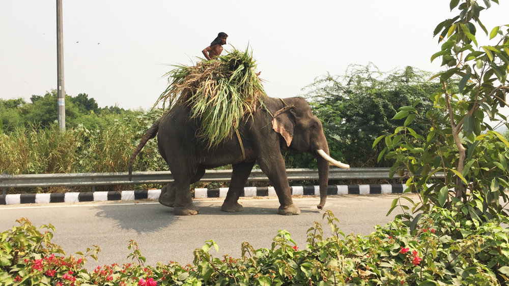 Man riding elephant farm in New Delhi India video production Rochester MN