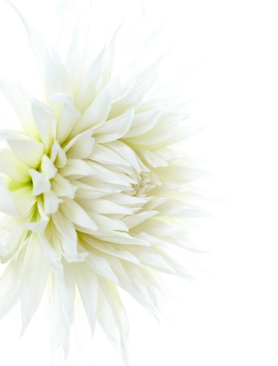 061511_flowers_103.jpg
