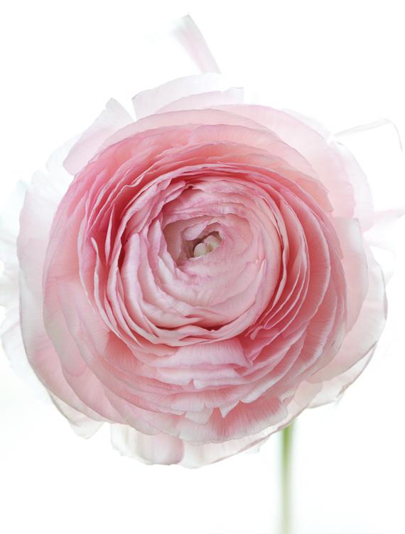 061511_flowers_115.jpg